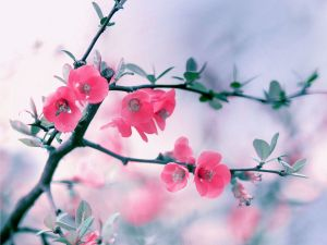 Spring-Blooming-Flower-